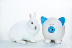 White bunny sitting beside blue and white piggy bank Stock Photo