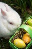 White bunny sitting beside easter eggs in green basket Stock Photo