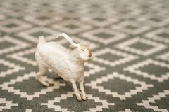 White bunny on a textural background of a carpet with a geometric pattern. Easter concept, tenderness, uniqueness, beauty. Bunny c. Lose up and copy space royalty free stock image