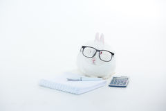 White bunny wearing human glasses with stationary and calculator Royalty Free Stock Image