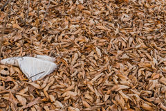 White burlap on brown leaves Royalty Free Stock Photos