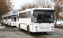 White buses Stock Images