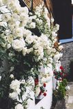 White bushy braided roses in garden on background of stone old house closeup on a sunny summer day, buds of delicate flowers royalty free stock photos