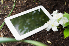 White Business Tablet On Soil With Some Flowers. A White Business Tablet On Soil With Some Flowers Royalty Free Stock Photo