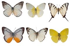 White butterflies Stock Images