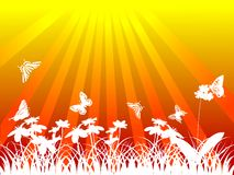 White butterflies and flowers under sun Royalty Free Stock Images