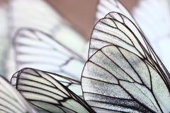 White butterflies on sand Stock Photos