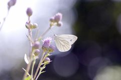 White butterfly. Sitting on flower stock images