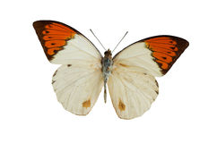 The White Butterfly 2. White butterfly isolated on a white background Royalty Free Stock Photography