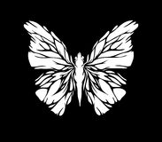 White butterfly. An illustration of a white butterfly isolated on black Stock Photography