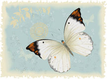 White butterfly in the blue. Butterfly on a blue retro styled background. Vector illustration. All objects are isolated Royalty Free Stock Photos