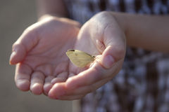 White butterfly in child's hands. Stock Image