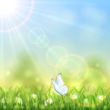 White butterfly and flower Stock Photography