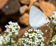 White butterfly and flower Royalty Free Stock Photo