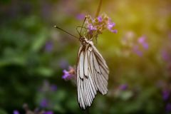White butterfly on a flower. stock images