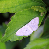 White butterfly. The white butterfly in garden royalty free stock photography