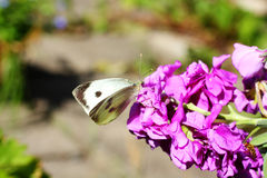 White butterfly in the garden close up Royalty Free Stock Photo