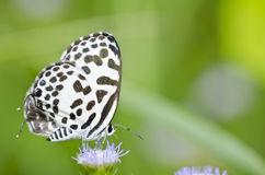 White butterfly in garden or in green nature Stock Photos