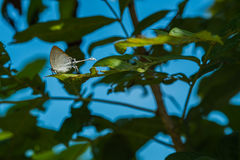 White butterfly. Butterfly white garden nature beautiful wing background insect butterflies natural view beauty summer closeup green feeding Stock Photo