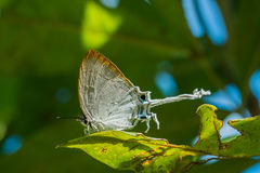 White butterfly. Butterfly white garden nature beautiful wing background insect butterflies natural view beauty summer closeup green feeding Stock Photos