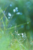 White butterfly hidding on herbs. White butterfly hidding on green herbs Royalty Free Stock Photo