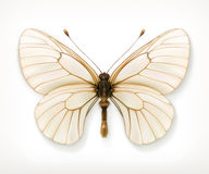 White butterfly icon Royalty Free Stock Photo