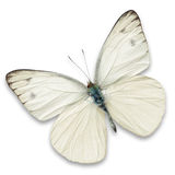 White butterfly. Isolated on white background Stock Photo