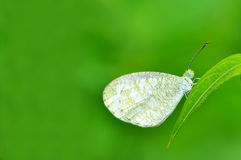 White butterfly on leaf Stock Photo