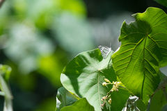 White butterfly om green leaf Royalty Free Stock Photos