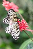 white butterfly on plants Royalty Free Stock Images
