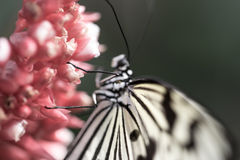 white butterfly on plants Stock Photos