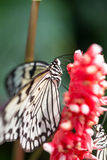 white butterfly on plants Royalty Free Stock Image