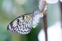 white butterfly on plants Royalty Free Stock Photography