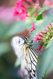 white butterfly on plants Stock Photography