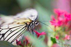 white butterfly on plants Stock Images