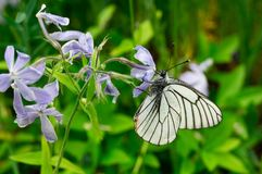 White butterfly. On the flower in a garden Royalty Free Stock Photography