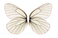 White butterfly wing Stock Image