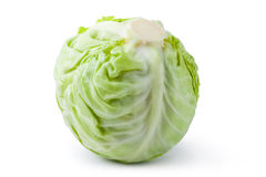 White cabbage. Laying on a white Royalty Free Stock Images