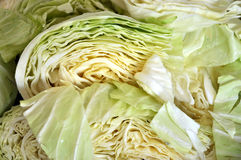White cabbage Stock Photography