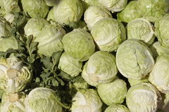 White Cabbage. Pile of white cabbage for sale royalty free stock images