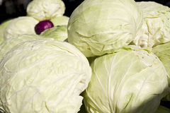 White cabbage. Close up of white cabbage royalty free stock photos