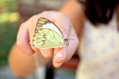 White cabbage butterfly. A white butterfly Cabbage quietly resting on the hand of a little girl Stock Images