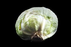 White cabbage is used for cooking a variety of dishes royalty free stock photography