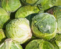 White cabbages Stock Photos