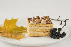 White cake with cocoa and chokeberry maple leaf. Piece of white cake on plate sprig Aronia berries maple leaf Royalty Free Stock Image