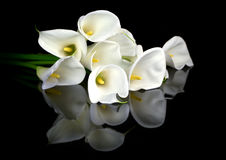 White calla bouquet. On black background Royalty Free Stock Image