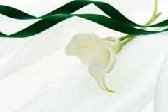 White calla and green ribbon. Calla and green ribbon on soft chiffon Royalty Free Stock Photo