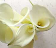 White calla lilies from above Royalty Free Stock Photo