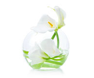 White calla lilies in glass vase Royalty Free Stock Images