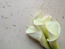 White calla lilies on textured paper Stock Photos